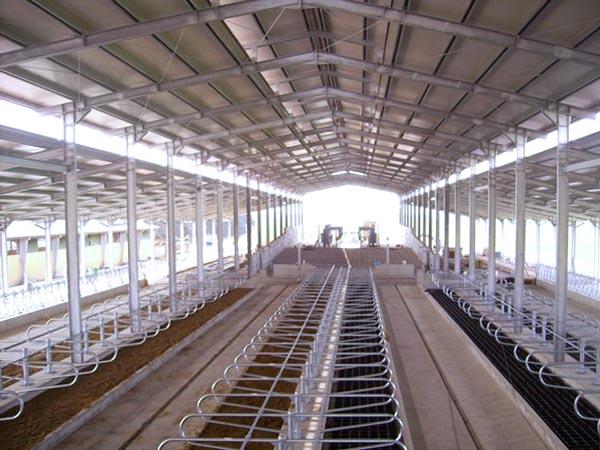 New farms blister 11